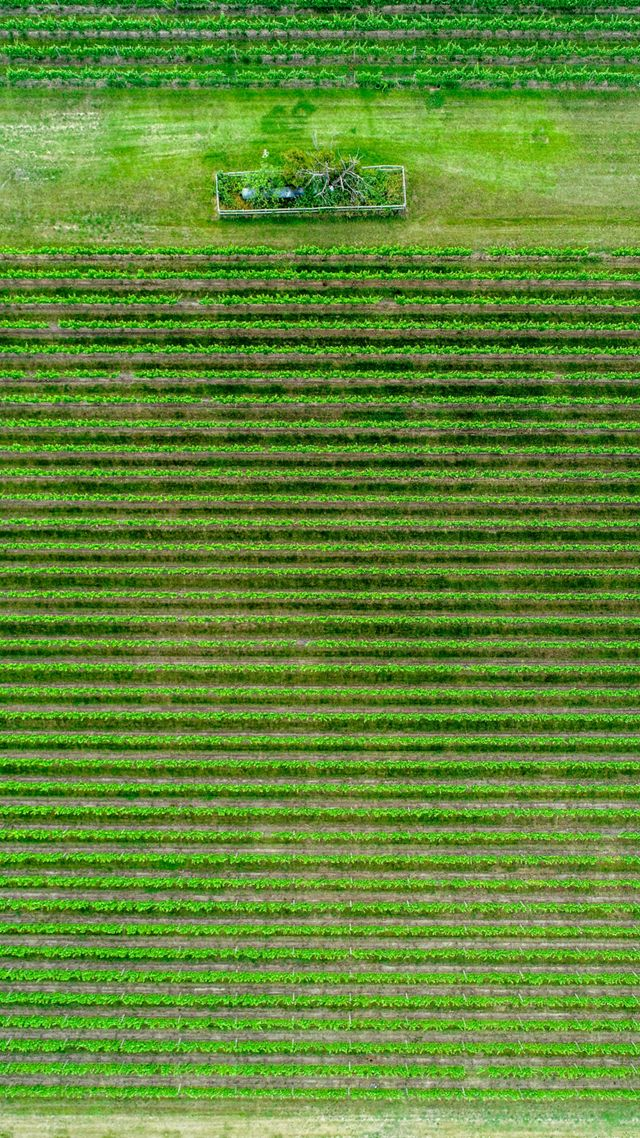 aerial view of a green farm field