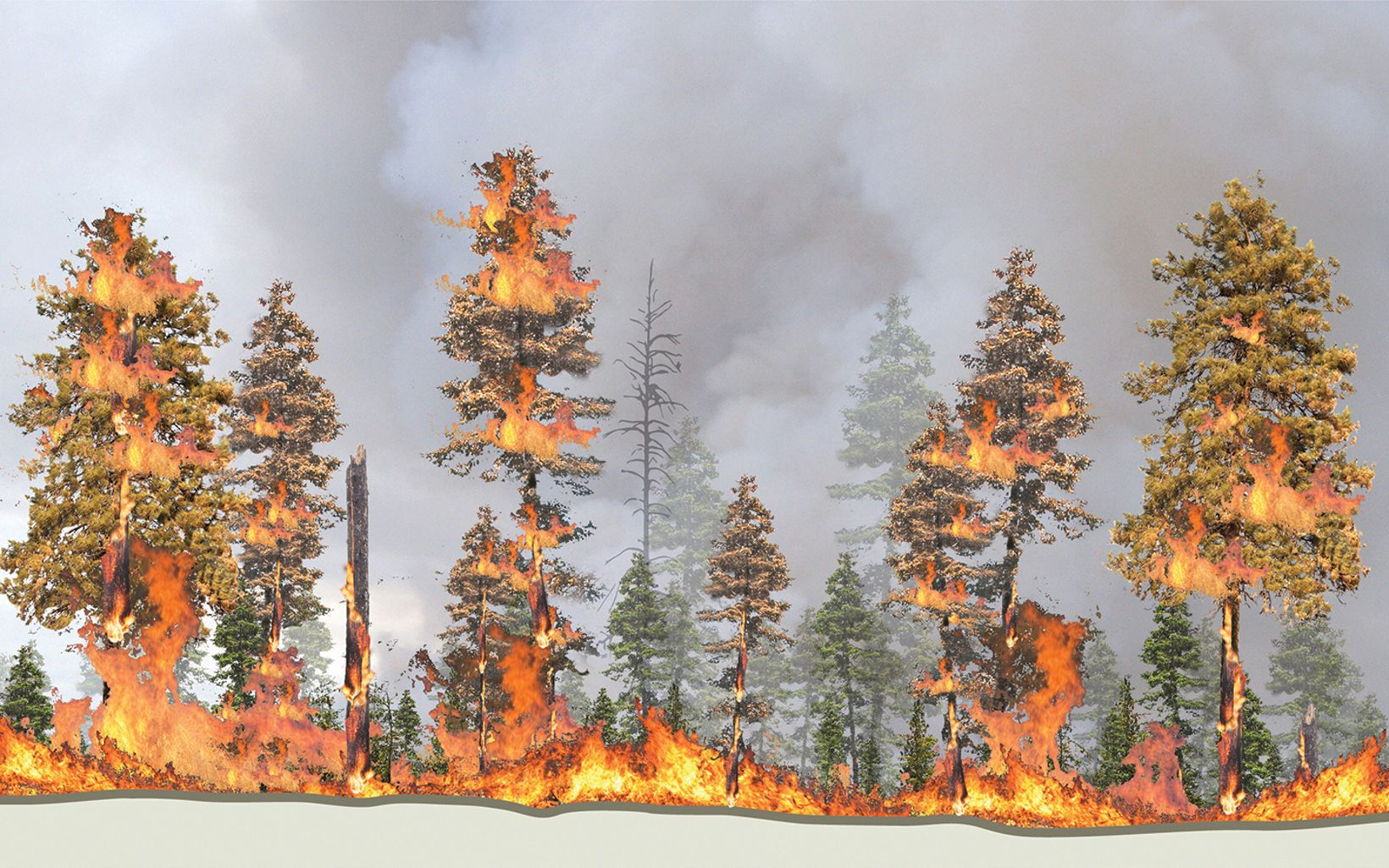 Fire in unthinned forest