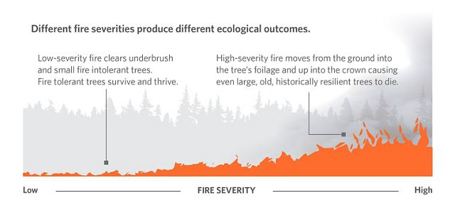 Low to High Severity Fire graphic