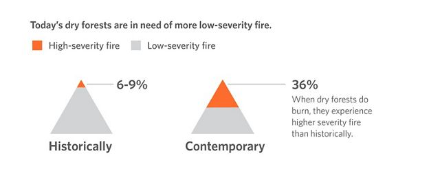 Today's dry forests are in need of more low-severity fire.