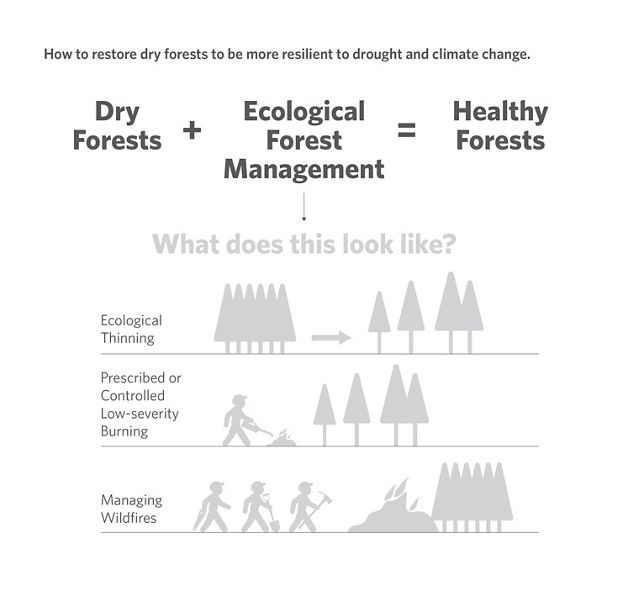 We can restore healthy forests with ecological forest management.