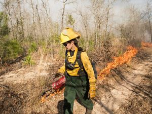 Prescribed burns are conducted on an 18 month to 2 year frequency at  Roy E. Larsen Sandyland Sanctuary.