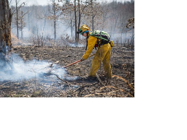 A woman rakes after a prescribed fire.