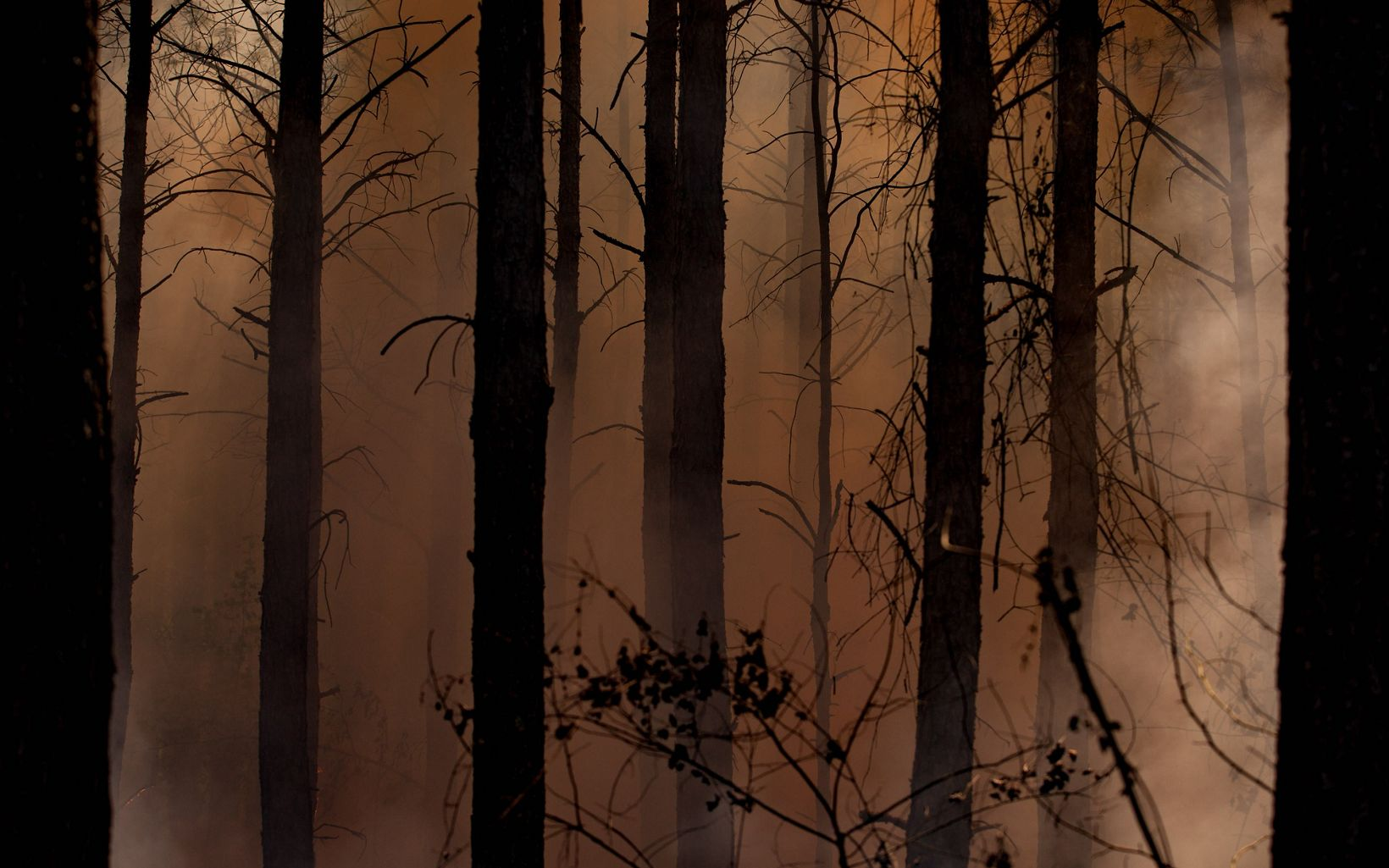 Light filters through the smoke during the largest ever controlled burn ignited at Piney Grove Preserve.