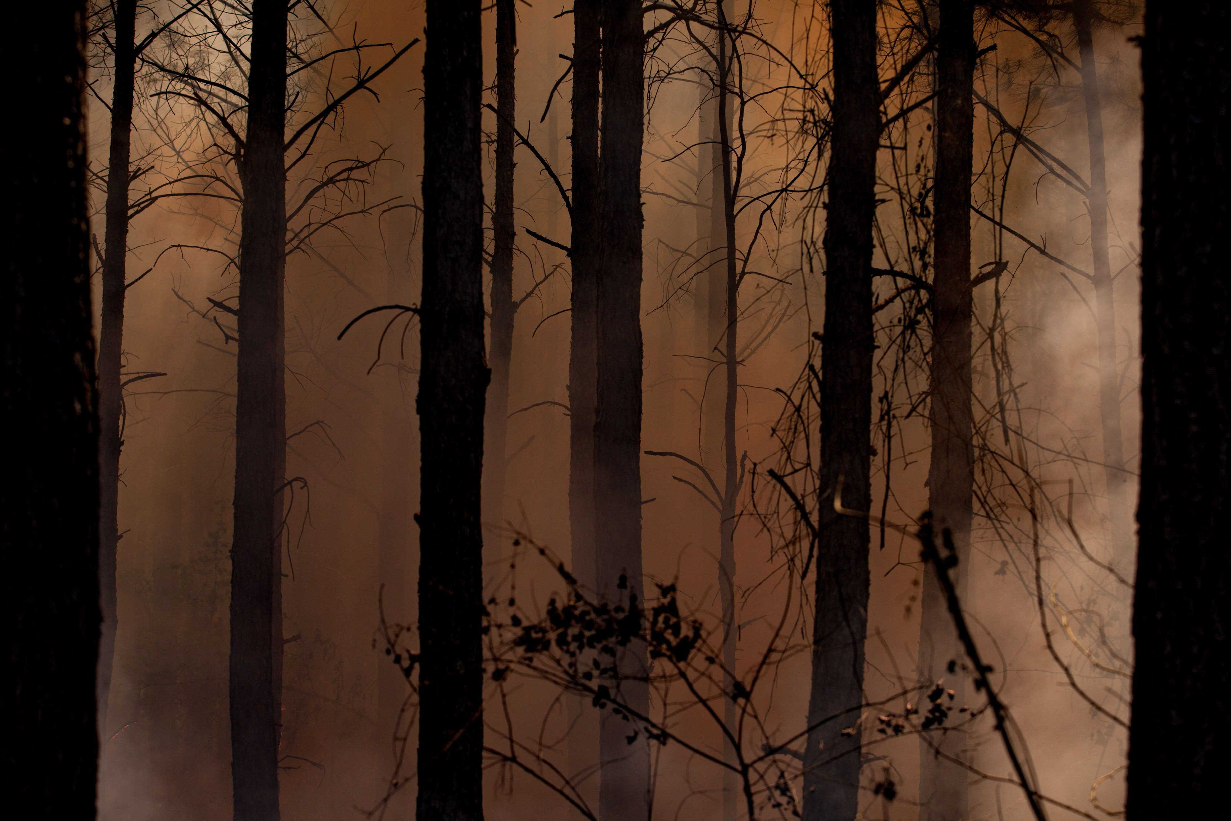 Thick smoke fills a forest, silhouetting tree trunks in black against brownish-gray light.