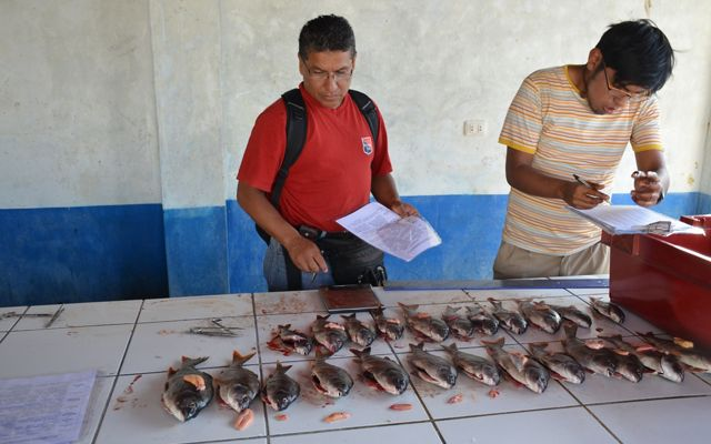 By applying the FishPath approach, Ancon fishers decided to focus on improved data collection to learn more about their fishery and implement management rules.