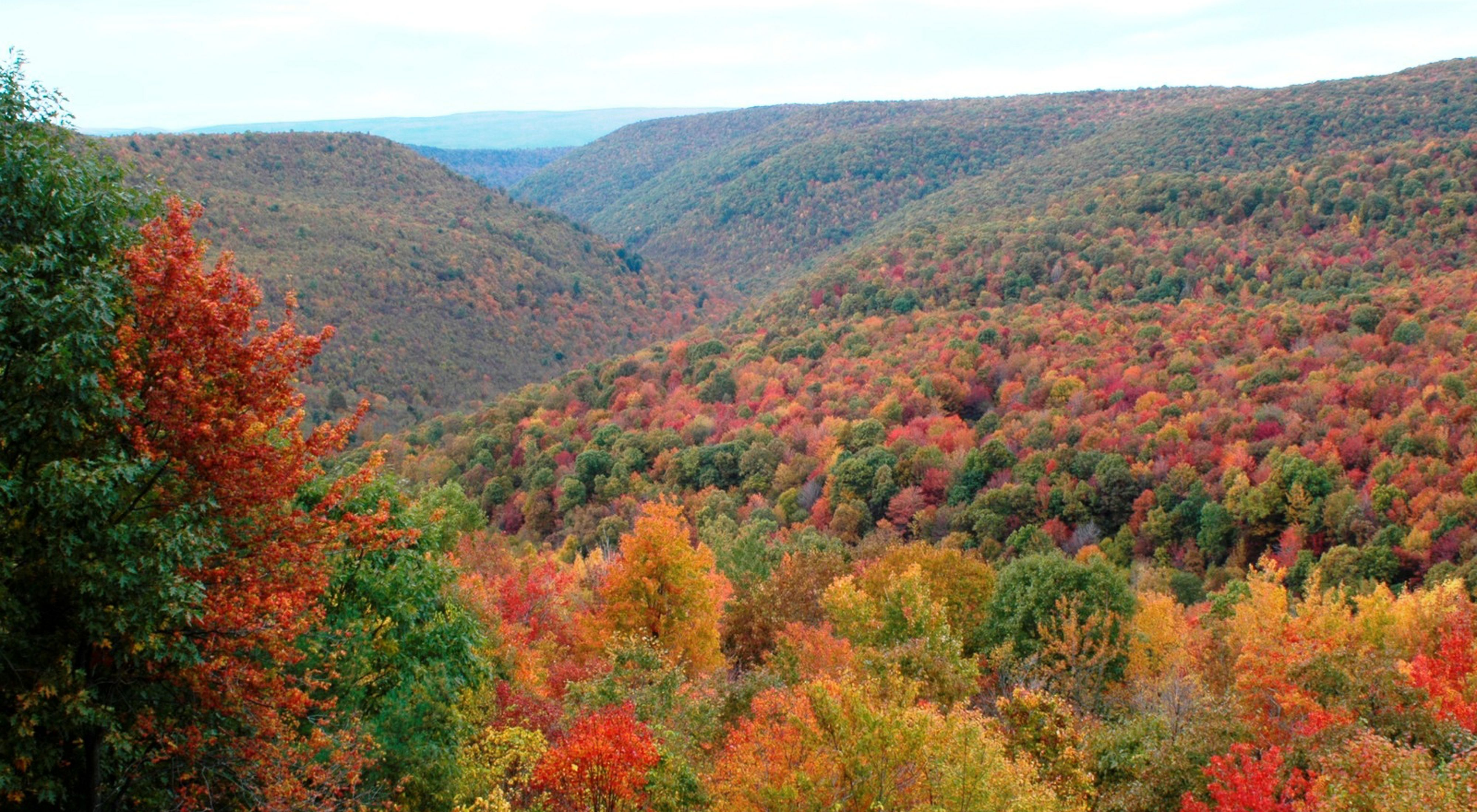 Rolling mountain ridges covered in forests. The leaves show bright autumn colors of red, gold and orange.