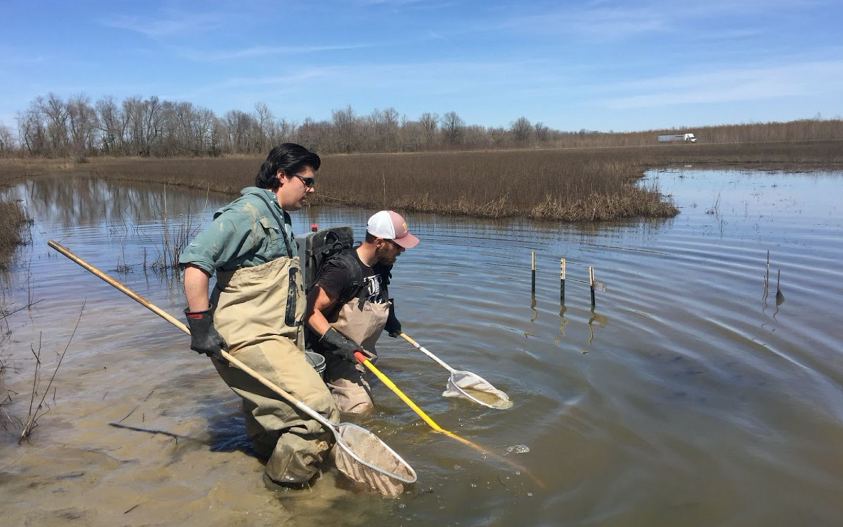Two researchers dip nets into water in a wetland.