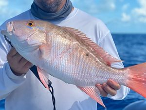 A fisherman holds a mutton snapper fish caught in the Florida Keys.