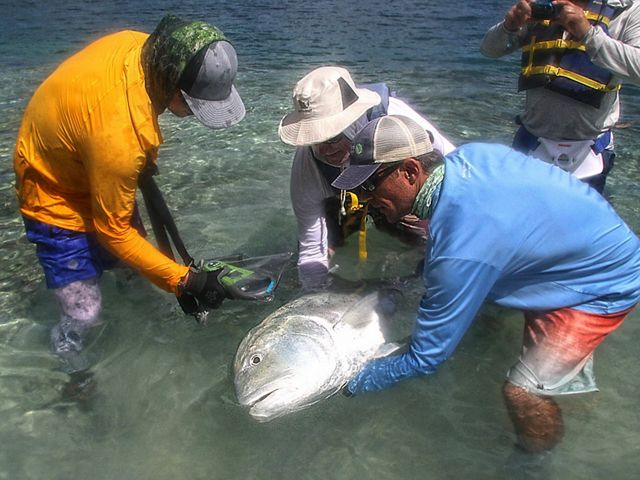 Researchers examine one of the key fish species under study.