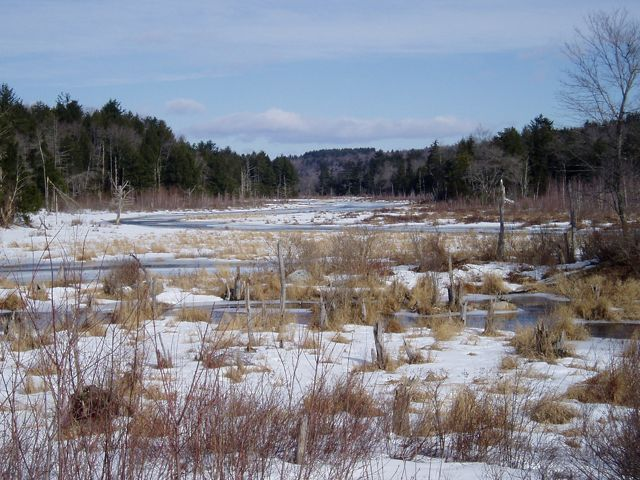 Snow covers a partially-frozen wetland surrounded by a forest of evergreens and trees without their leaves.