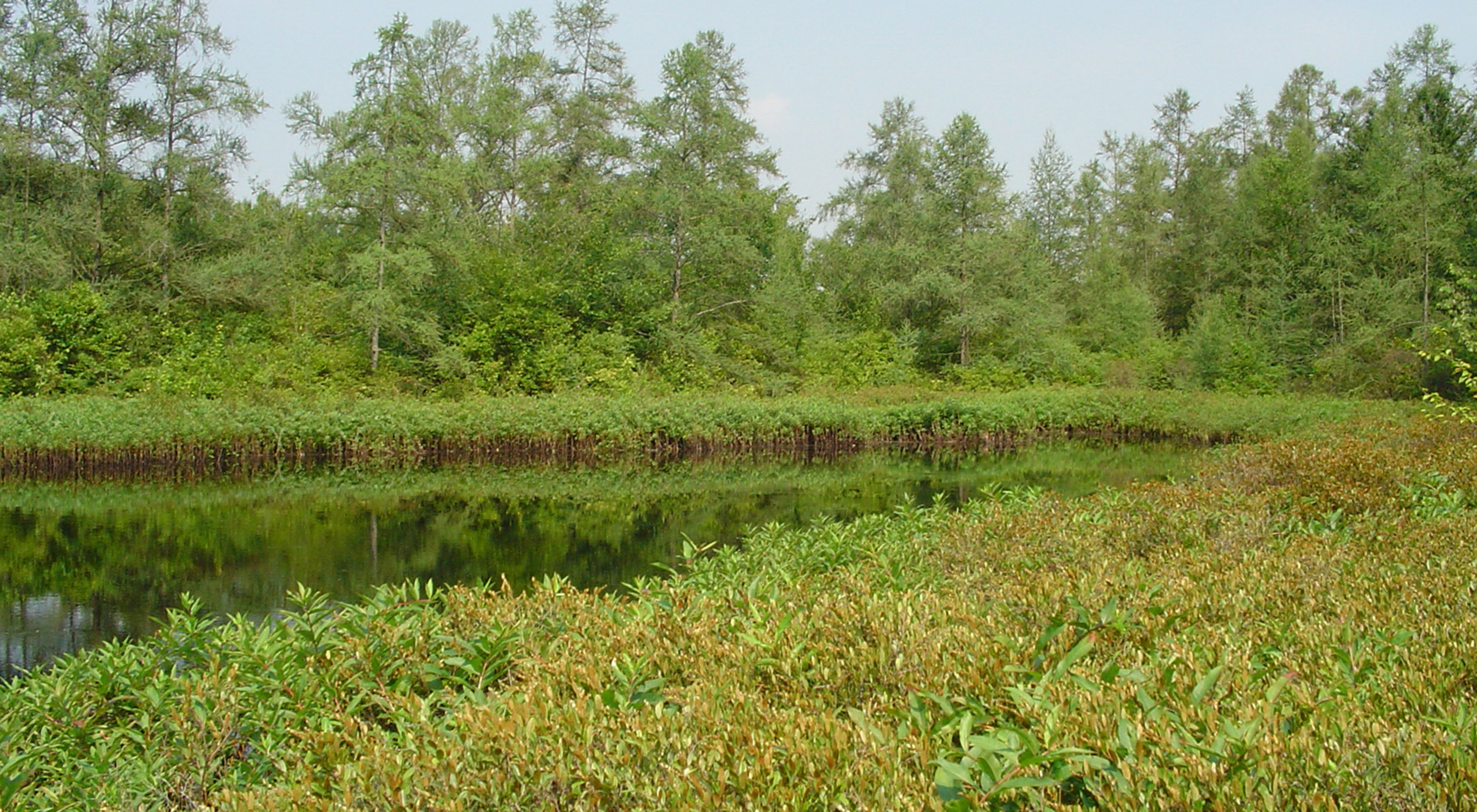 a rare tamarack-ringed, kettle-hole bog in northeast Ohio.