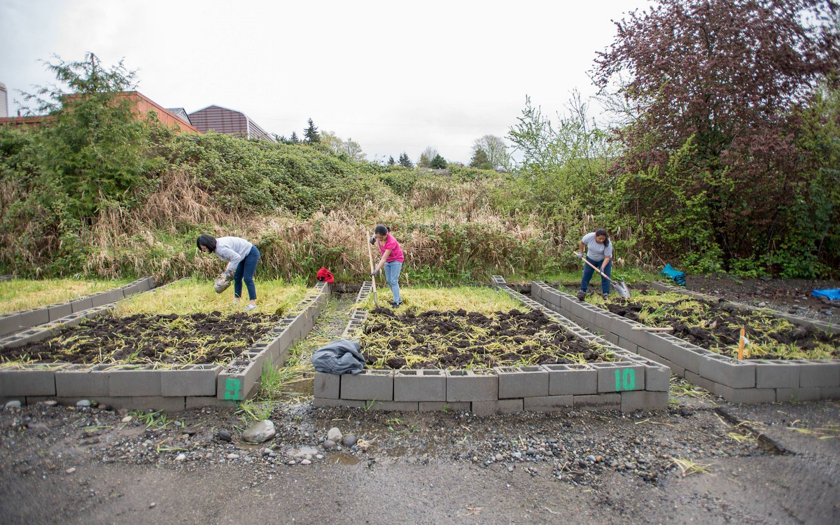 Volunteers and refugees flip soil in garden plots to prepare for a planting day.
