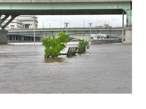 A bench is surrounded by city floodwaters.