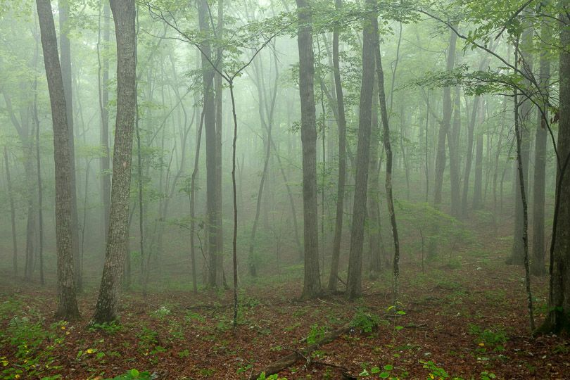 Fog surrounds a forest.