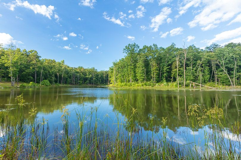 Tall green trees urround a still lake.
