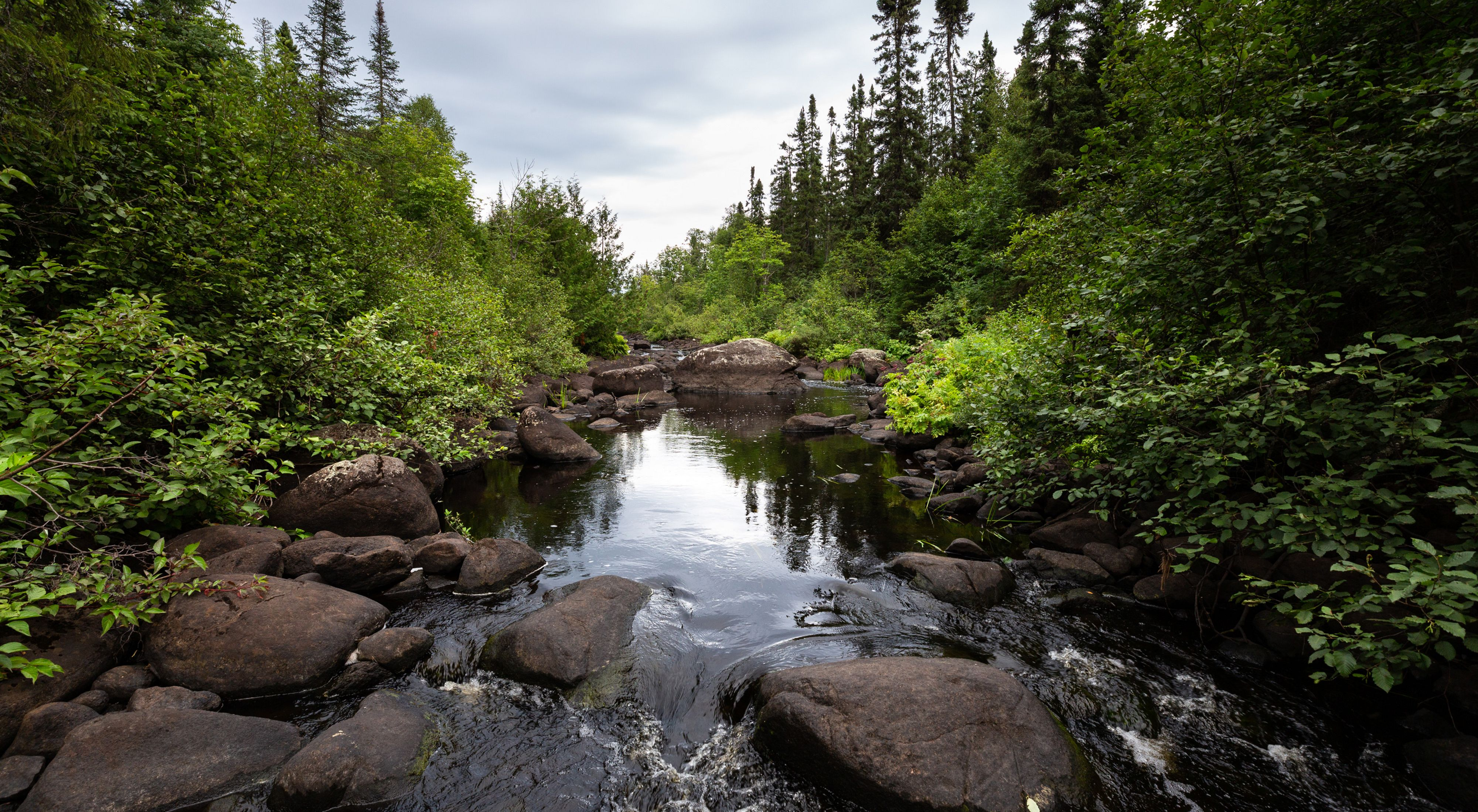 Cold-water stream in the northern woods of Minnesota.