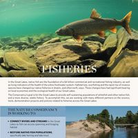A 4-page overview of the fisheries strategies for Michigan and the Great Lakes.