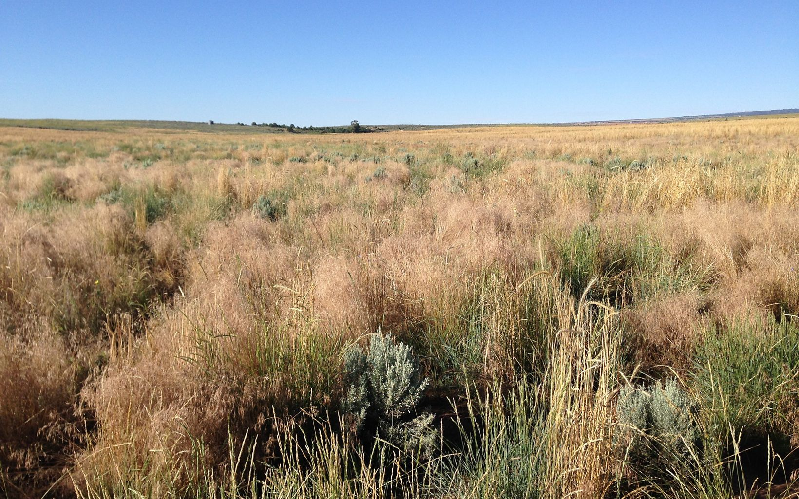 The preserve is situated within the core of Utah's remaining sagebrush shrublands.