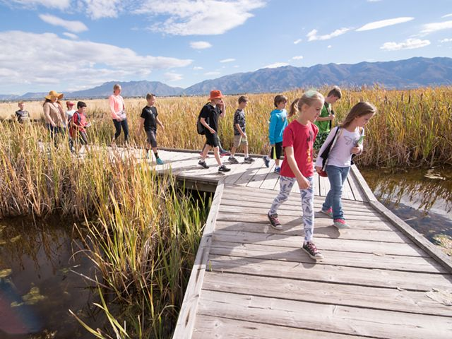 Children walk along a boardwalk while looking at the grass growing out of a wetland.