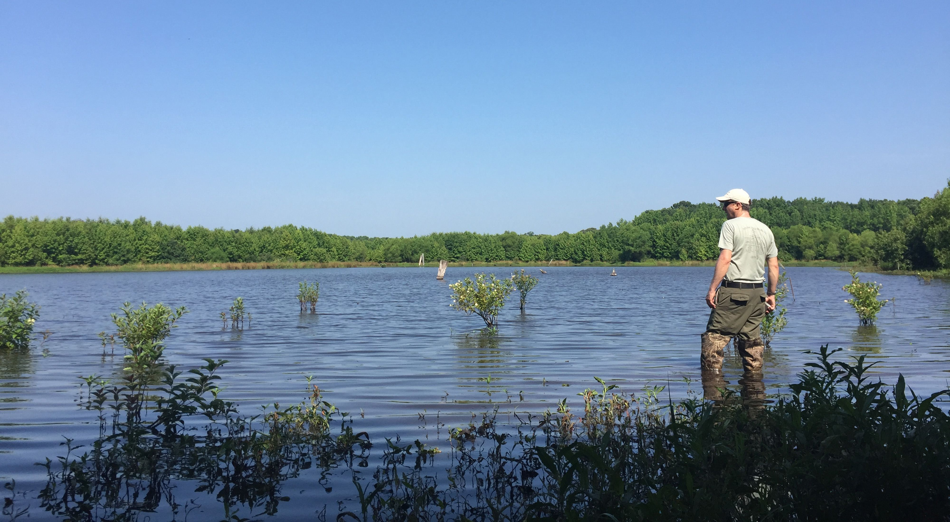 Delmarva bays are seasonally flooded freshwater wetlands that are among Maryland's rarest natural communities.
