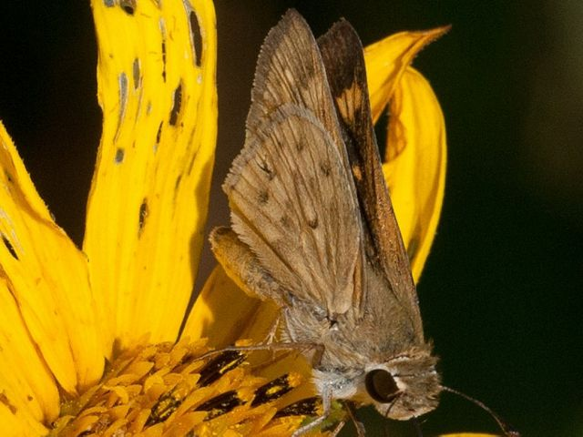photographed by George Pierson during a TNC butterfly survey.