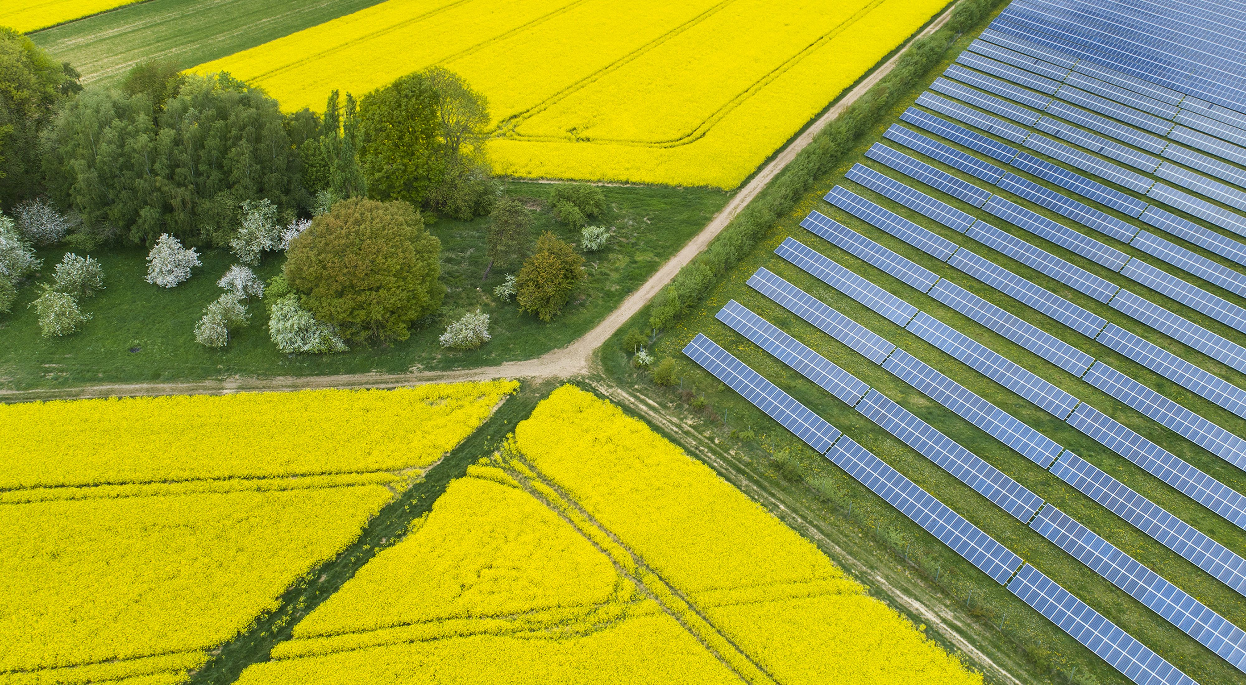 a field of solar panels adjacent to farm fields of yellow blooming canola