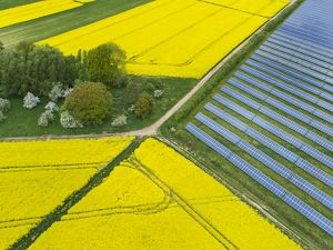 a field of solar panels adjacent to farm fields of yellow blooming canola plants