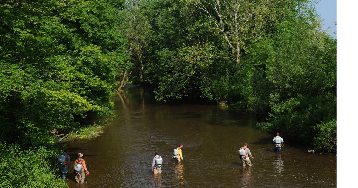 Invasive Species removal around the Grand River near Rock Creek, OH