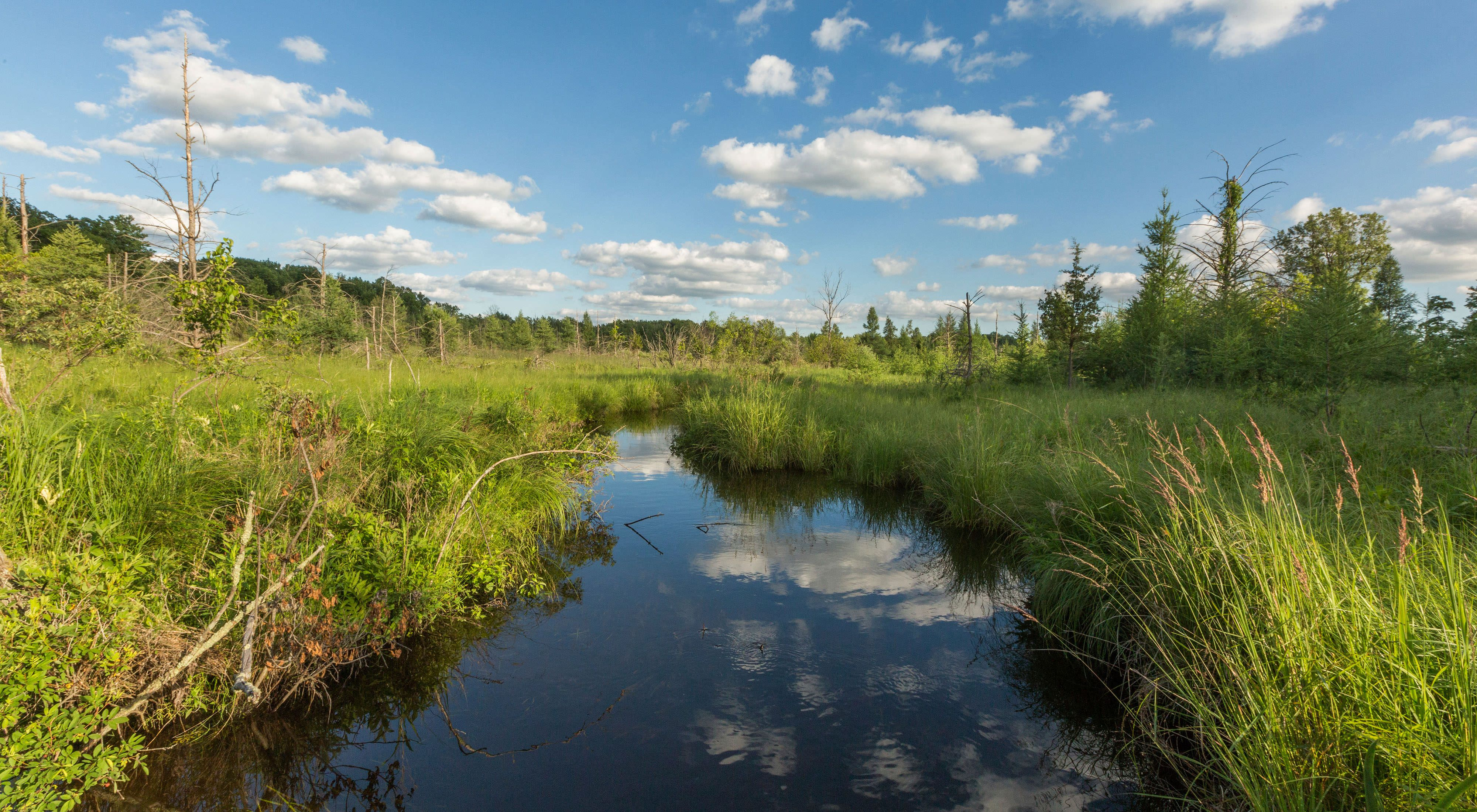 Grand River Fen Preserve is home to the longest river in the state of Michigan, the Grand River.