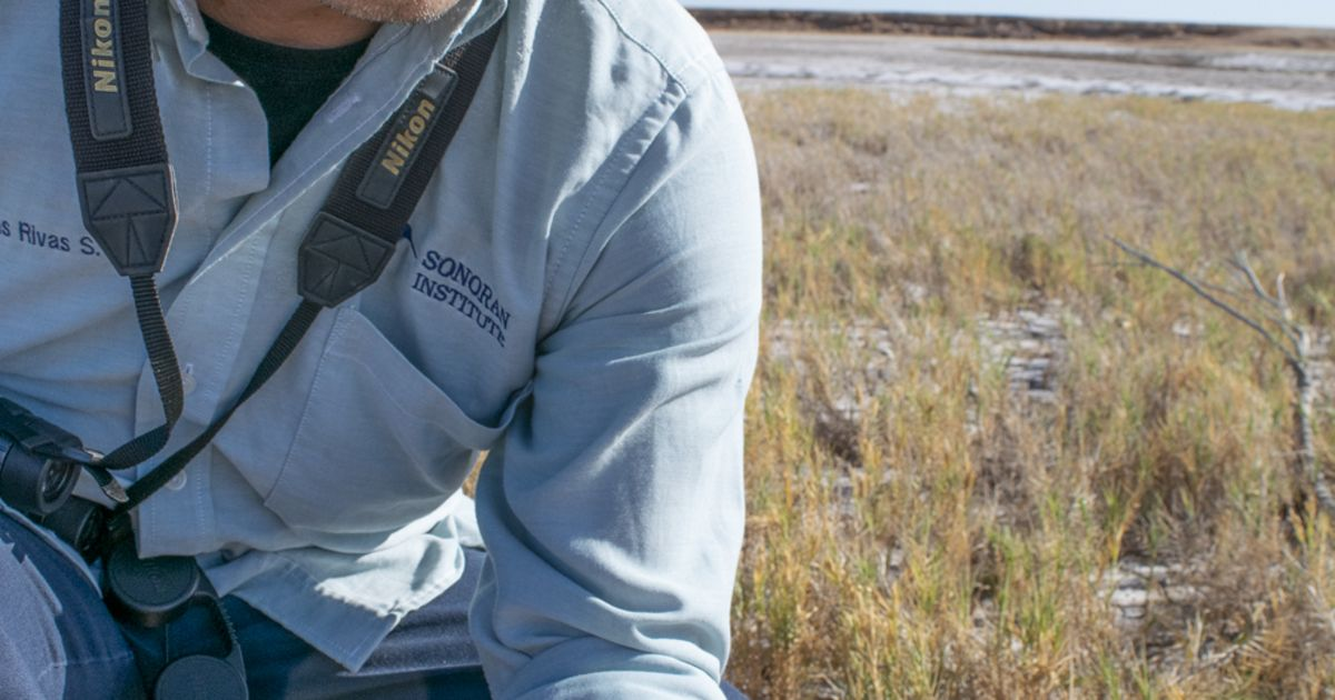 The Sonoran Institute's Tomas Rivas Salcedo holds salt grass seeds in his hand.