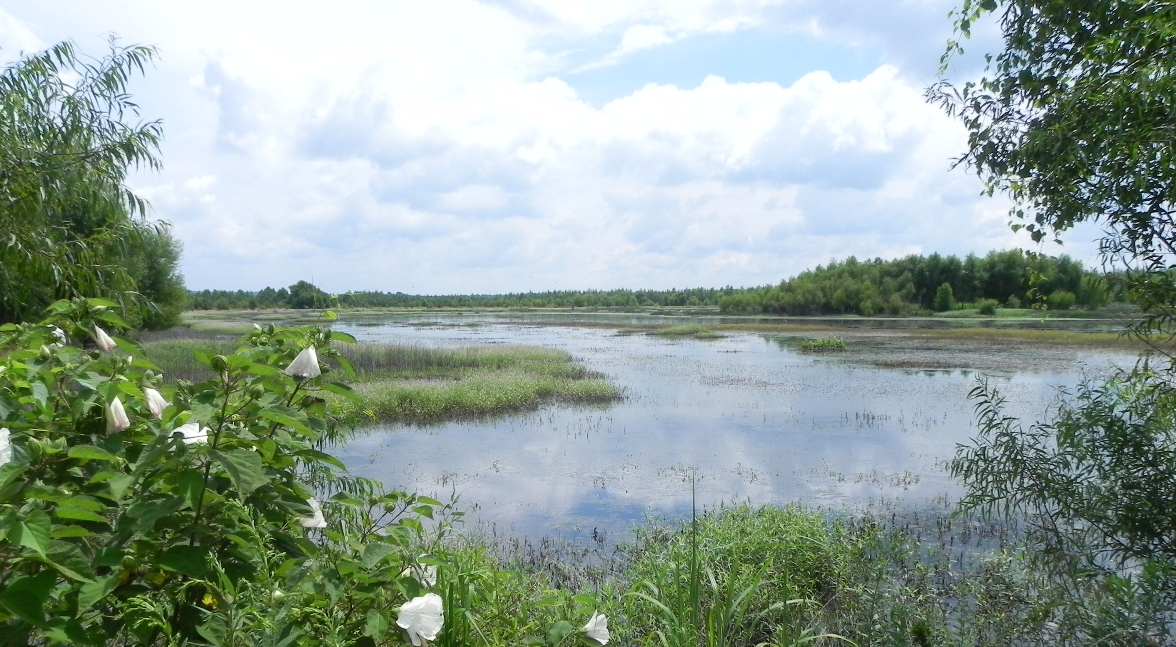 Grassy Slough in the Cache River wetlands.