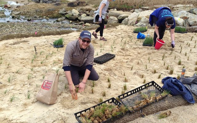 Eric Roberts, coastal resilience specialist for TNC, plants marsh grass at Gray's Beach in Kingston, Massachusetts, as part of a living shorelines project.