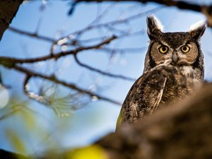 A great horned owl sits on a tree branch.