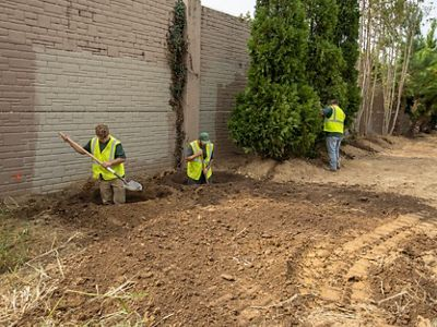 Workers dig holes in the dirt next to a highway wall separator to plant trees.