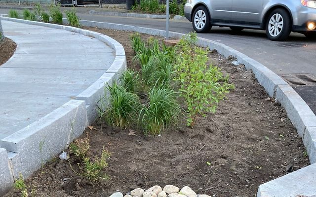 A strip containing dirt, rocks and plants runs between a roadway and a sidewalk.