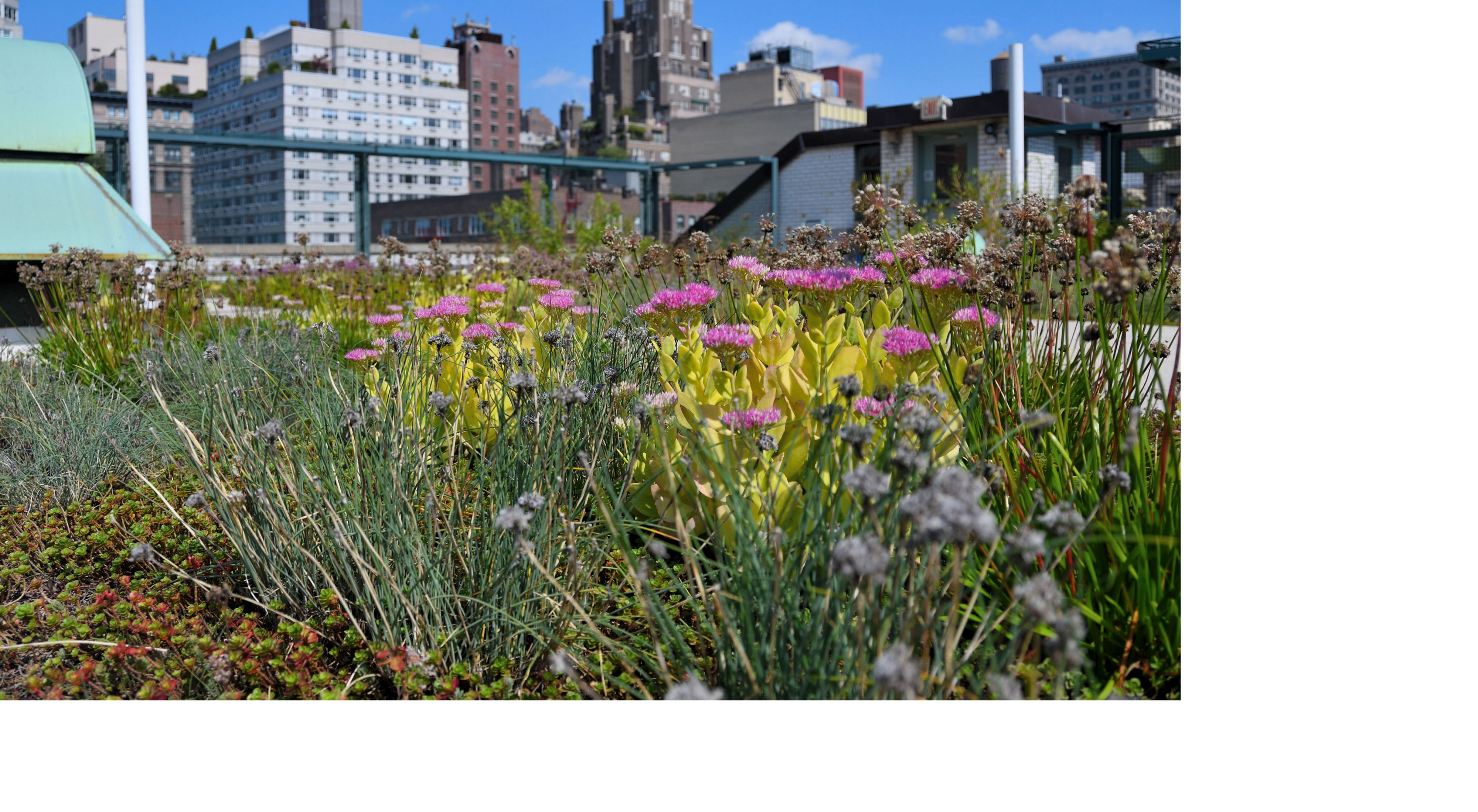 Green roof in New York City