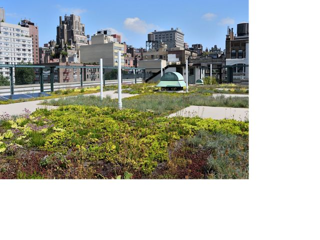 green roofs can lessen the negative impacts of stormwater on local waterways, reduce street flooding, improve air quality and much more.