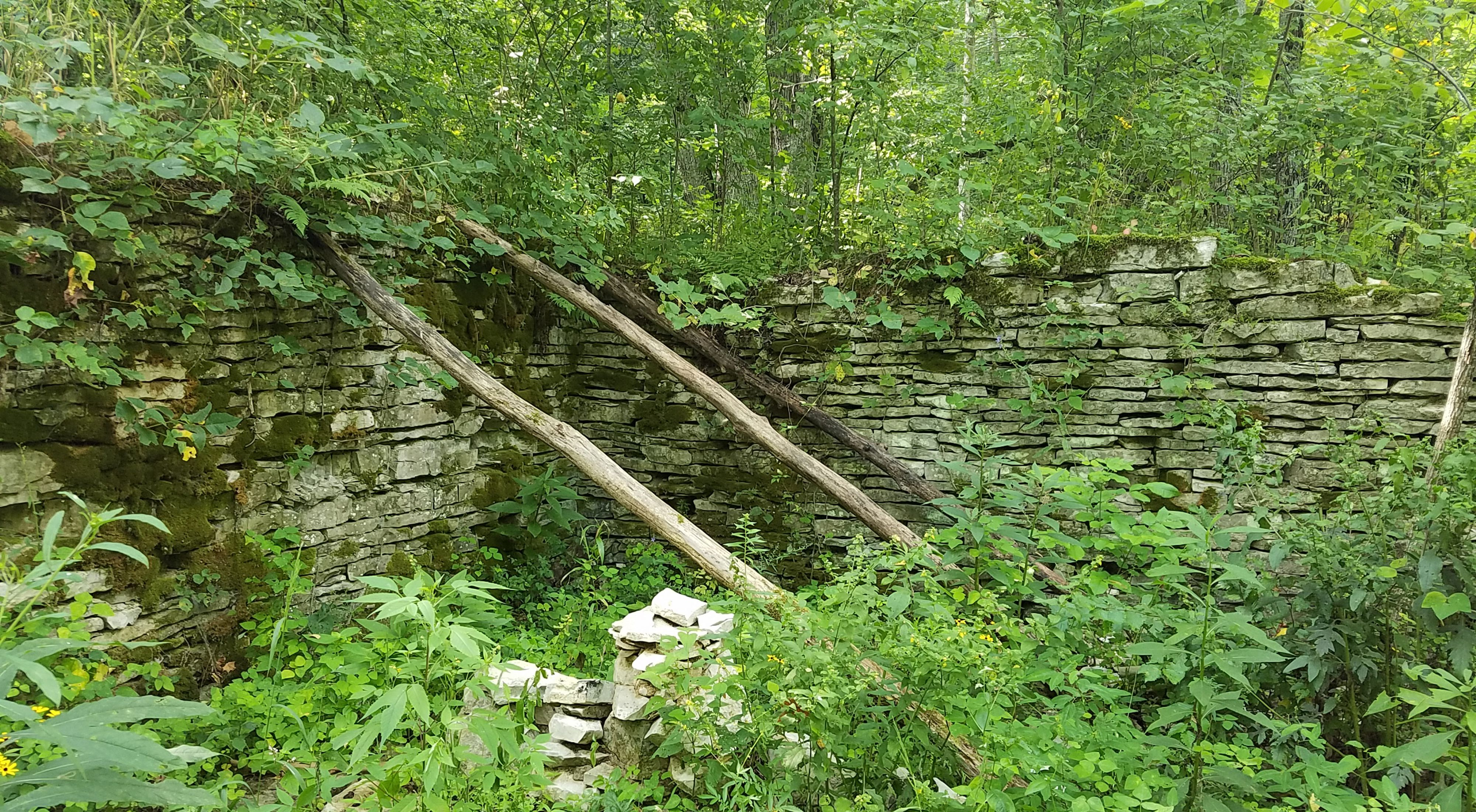 Old stone foundation among a forest of green.