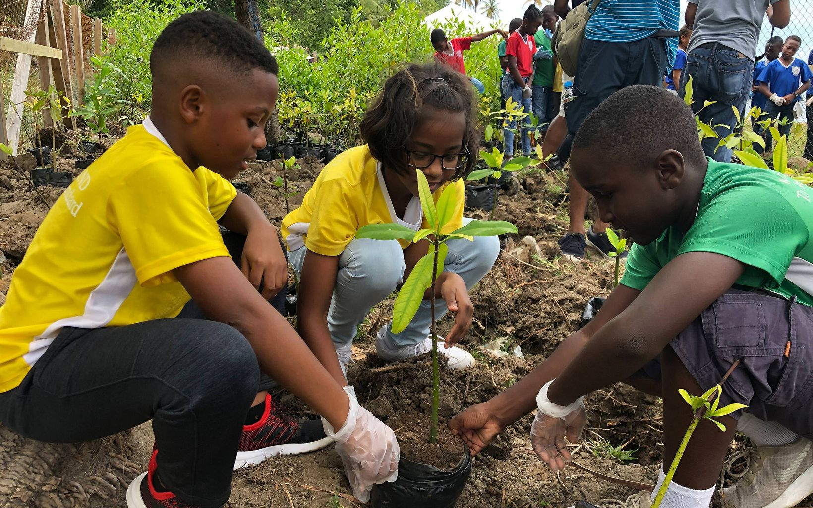 Kids plant mangrove seedlings at a community event