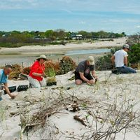 Coastal dune grass planting in Waterford, Connecticut.