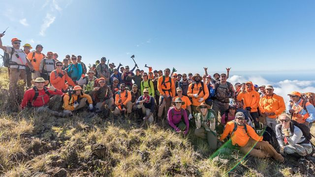 Members of the Haleakala Pine Pull Partnership