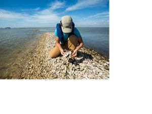 Person examining oyster shells at Half Moon Reef in Matagorda Bay, TX.