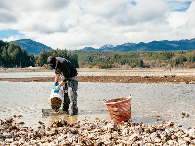 Shellfish farming in Washington State