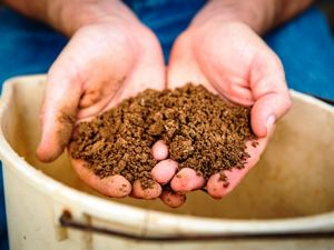 Two hands hold brown soil.