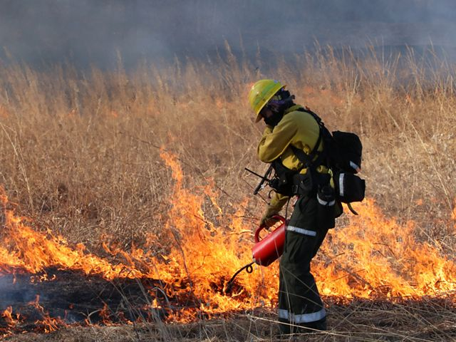 A woman dressed in yellow and orange fire gear and face mask holds a drip torch to a patch of tall prairie grass already alight with a small line of fire.