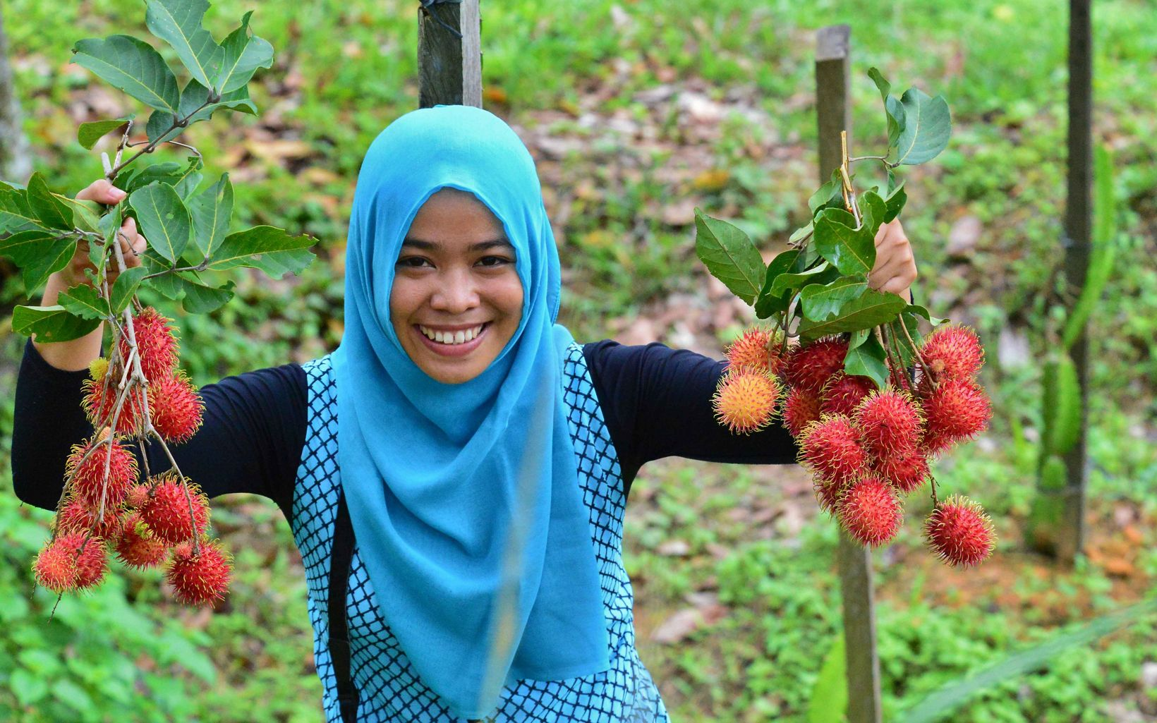 Local villagers can sell rambutan – an example of how healthy forests can help provide revenue for local communities.