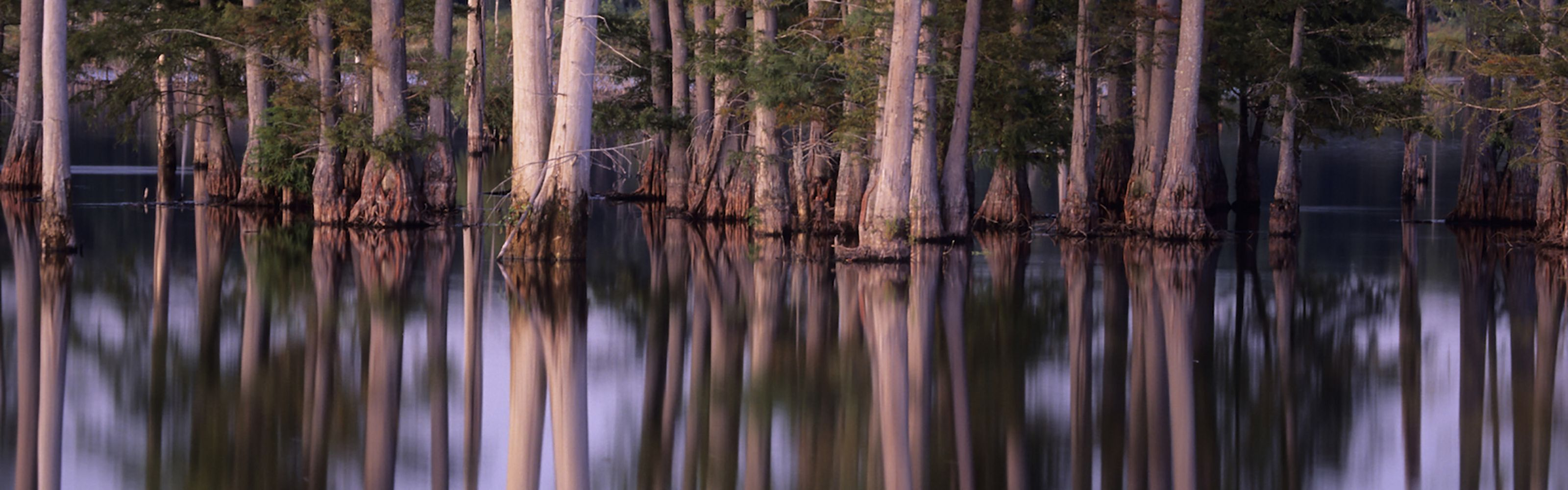 A stand of trees surrounded by water.