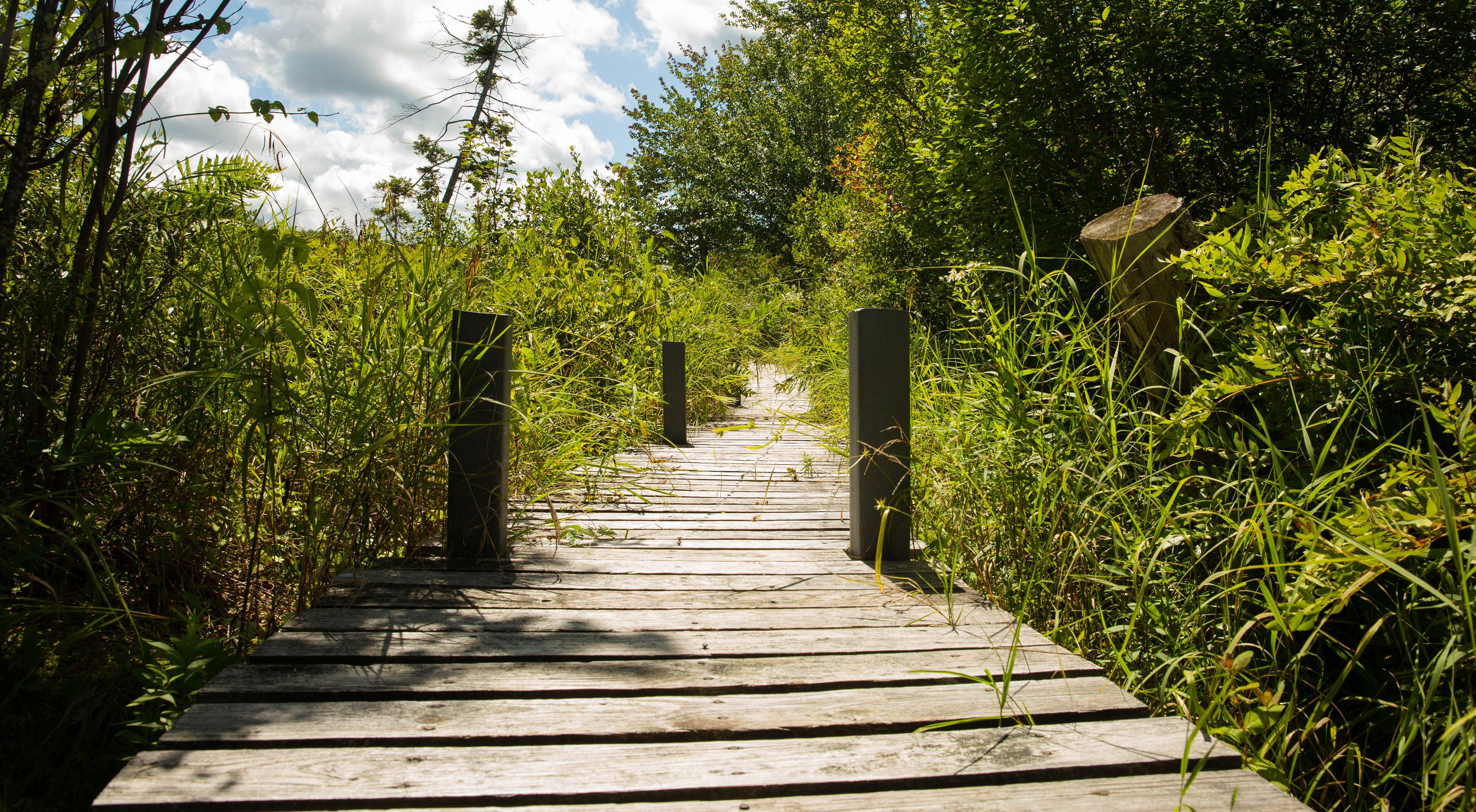 Boardwalk at Hawley Bog Preserve