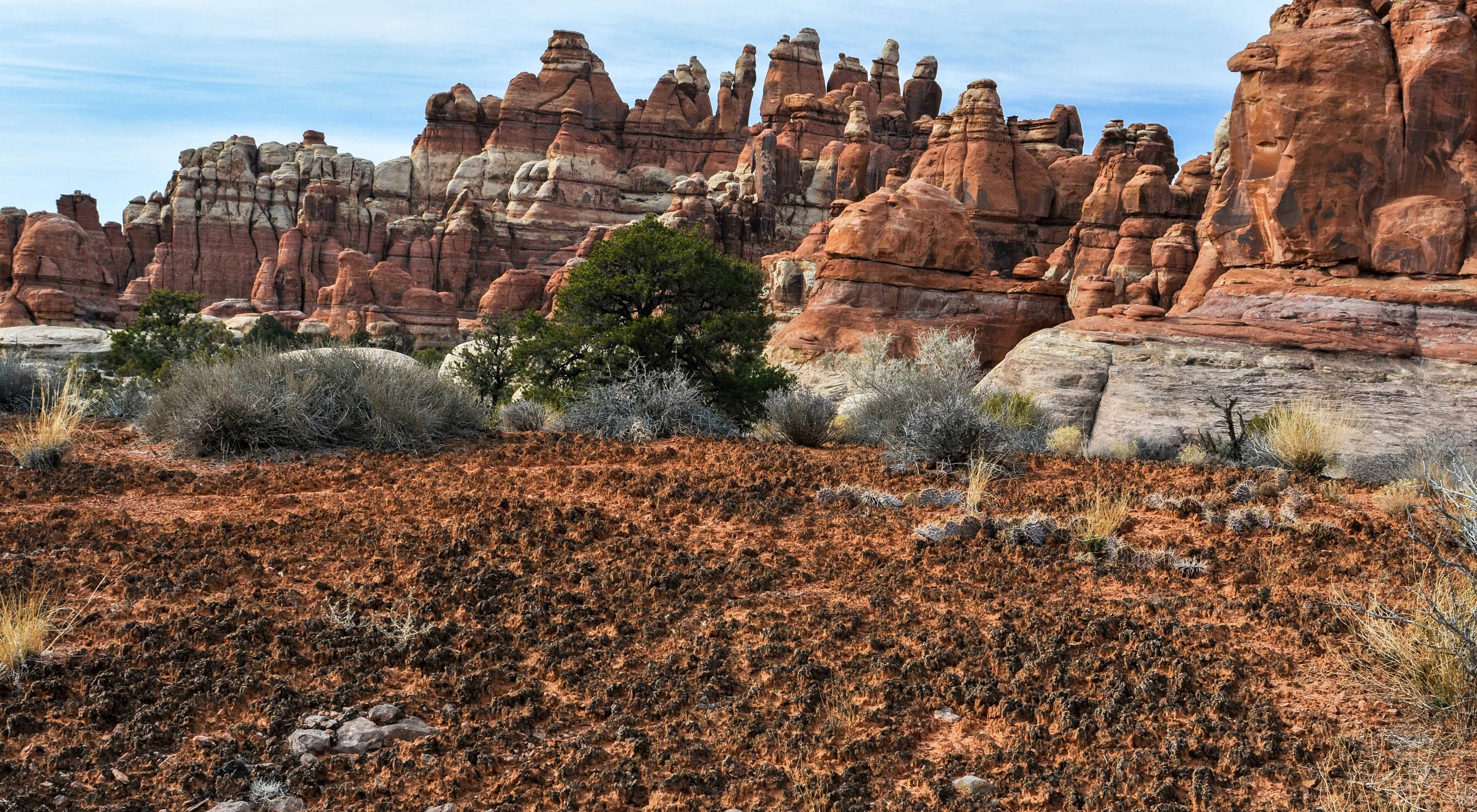A landscape of red rock cliffs with biocrust in the foreground. The biocrust looks like a crusty reddish brown soil with scattered cactus plants.